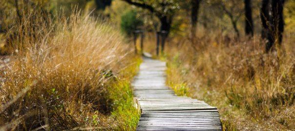 die 4 indi(ani)schen Gesetze Spiritualität Wille Weg Entscheidung